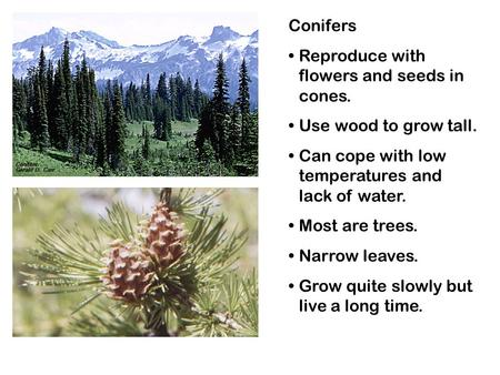 Conifers Reproduce with flowers and seeds in cones. Use wood to grow tall. Can cope with low temperatures and lack of water. Most are trees. Narrow leaves.