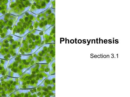 Photosynthesis Section 3.1. Overview of Photosynthesis General Equation: Light Energy 6 CO 2 + 6 H 2 O  C 6 H 12 O 6 + 6 O 2.
