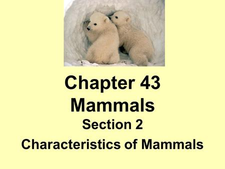 Section 2 Characteristics of Mammals