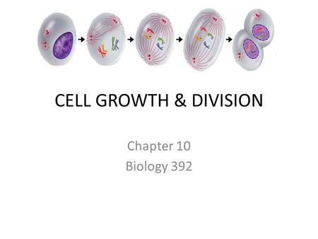 CELL GROWTH & DIVISION Chapter 10 Biology 392. Smaller is Better The bigger the cell becomes… the more demands the cell places on its DNA. the more trouble.