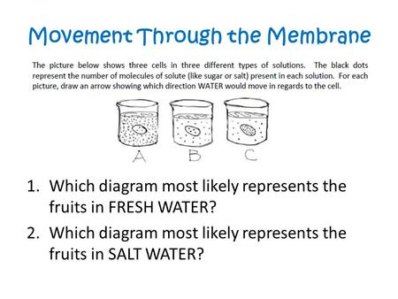 Movement Through the Membrane 1.Which diagram most likely represents the fruits in FRESH WATER? 2.Which diagram most likely represents the fruits in SALT.