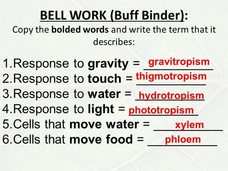 BELL WORK (Buff Binder): Copy the bolded words and write the term that it describes: 1.Response to gravity = __________ 2.Response to touch = __________.