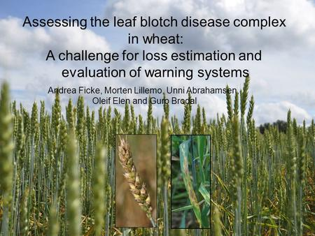 Assessing the leaf blotch disease complex in wheat: A challenge for loss estimation and evaluation of warning systems Andrea Ficke, Morten Lillemo, Unni.