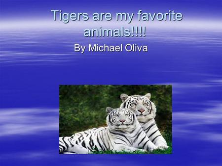 Tigers are my favorite animals!!!! Tigers are my favorite animals!!!! By Michael Oliva.
