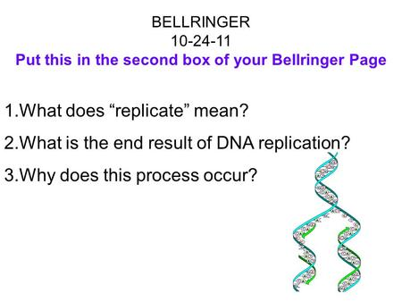 "BELLRINGER 10-24-11 Put this in the second box of your Bellringer Page 1.What does ""replicate"" mean? 2.What is the end result of DNA replication? 3.Why."
