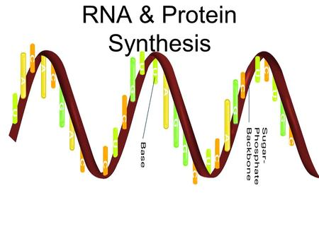 RNA & Protein Synthesis. RNA and Protein Synthesis Genes are coded DNA instructions that control the production of proteins within the cell DNA codes.