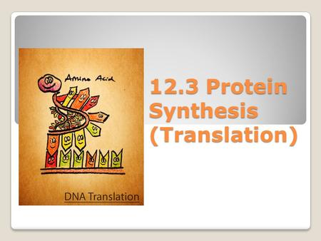 12.3 Protein Synthesis (Translation). Watch these animations and try to explain what is going on. ◦Animation 1Animation 1 ◦Animation 2Animation 2.