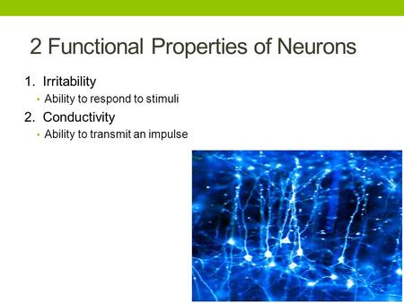 2 Functional Properties of Neurons 1. Irritability Ability to respond to stimuli 2. Conductivity Ability to transmit an impulse.
