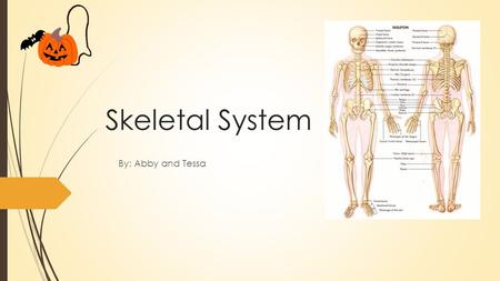 Skeletal System By: Abby and Tessa.