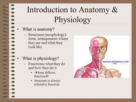 Introduction to Anatomy & Physiology What is anatomy? –Structures (morphology)- form, arrangement- where they are and what they look like What is physiology?