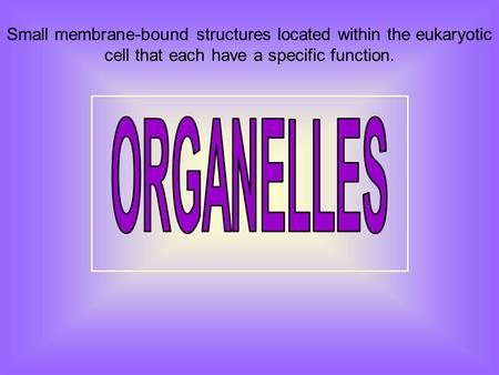 Small membrane-bound structures located within the eukaryotic cell that each have a specific function.