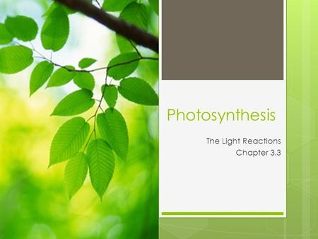 Photosynthesis The Light Reactions Chapter 3.3. Photosynthesis Review CO 2 + H 2 O C 6 H 12 O 6 + O 2 photosynthesis – creating sugar using light Only.
