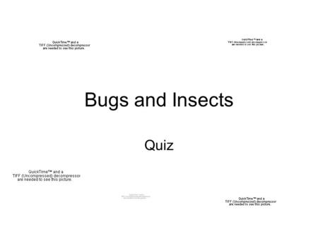 Bugs and Insects Quiz.
