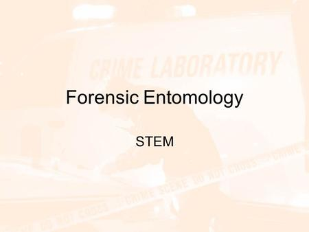 Forensic Entomology STEM.