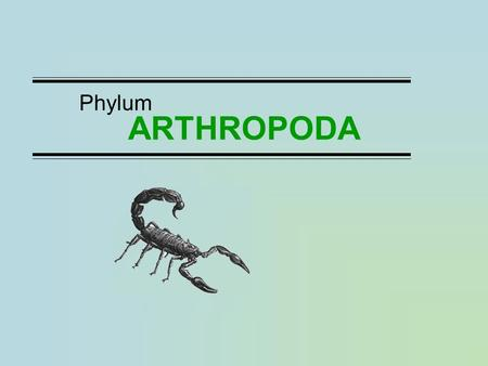 ARTHROPODA Phylum. Major Classes Arachnids: spiders, scorpions, ticks, mites Millipedes Centipedes Insects: beetles, flies, wasps, bees, grasshoppers,