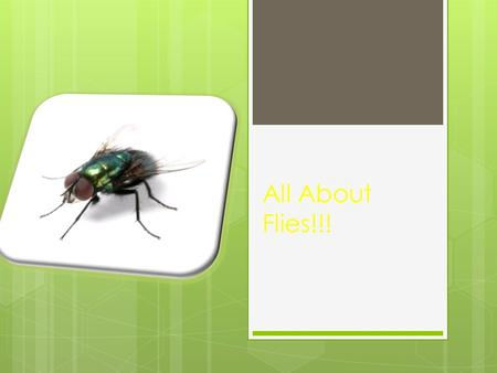 All About Flies!!!. How many stages are in a life cycle of a fly?  Six stages.