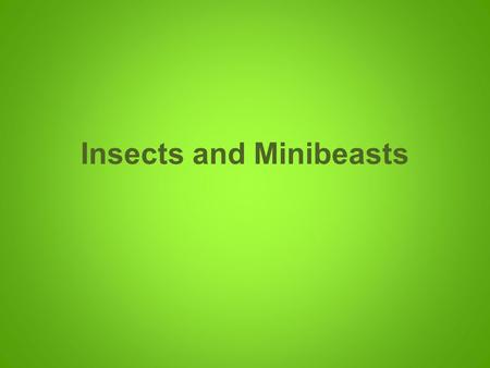 Insects and Minibeasts. Ants can lift 50 times their own weight!