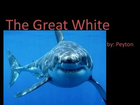 The Great White by: Peyton. General Information The shark fits in with the fish. The sharks scientific name is Carcharodon carcharias. The sharks lifespan.