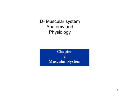1 Chapter 9 Muscular System D- Muscular system Anatomy and Physiology.