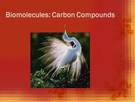 Biomolecules: Carbon Compounds. The Element Carbon (back side)  Carbon is the most abundant element found in living things.  Carbon has 4 valence electrons.