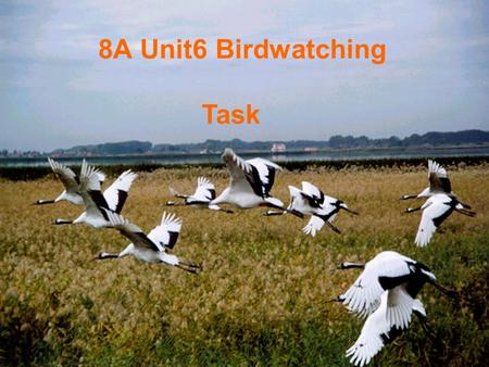 8A Unit6 Birdwatching Task. Different people's actions some peoplegovernmentmemberstourists They want to make the wetlands smaller in order to have more.