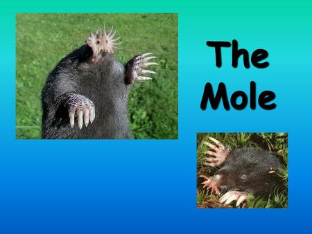 The Mole CA Standards A dozen If I have a dozen eggs, how many is that? 12 If I have a dozen pencils, how many is that? 12 If there are a dozen people.