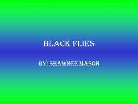 Black Flies By: Shawnee Mason. What are black flies? They are a member of the family Simuliidae of the Culicomprpha, Chironomidae, and Thaumaleidae. There.