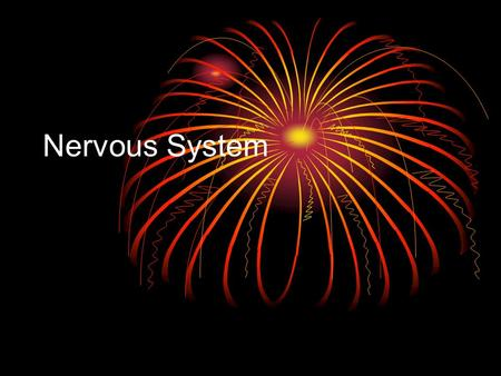 Nervous System. What does the nervous system do? The nervous system picks up messages from in and out of the body and turns them into signals that coordinate.