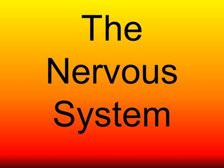 The Nervous System. What's it for? Your nervous system controls everything you do. The main organ of the nervous system is the brain. It is called the.