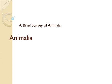 Animalia A Brief Survey of Animals. The study of animals is referred to as zoology. Animals are the largest of the 6 kingdoms, and exhibit a great diversity.