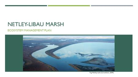 NETLEY-LIBAU MARSH ECOSYSTEM MANAGEMENT PLAN Fig. Netley Lake (Grosshans, 2004)