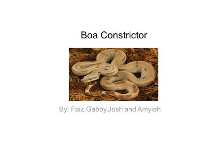 Boa Constrictor By: Faiz,Gabby,Josh and Amyiah. Facts The boa constrictors hunt at night. They attack at night. They squeeze their prey. They swallow.