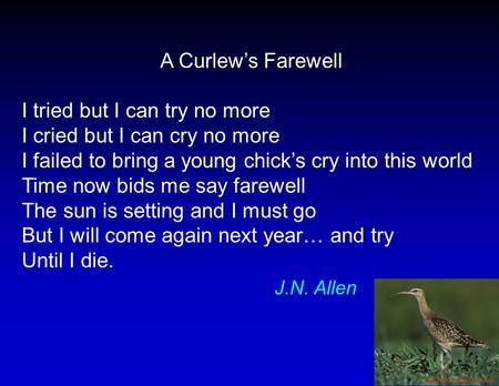 A Curlew's Farewell I tried but I can try no more I cried but I can cry no more I failed to bring a young chick's cry into this world Time now bids me.