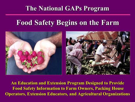 The National GAPs Program Food Safety Begins on the Farm An Education and Extension Program Designed to Provide Food Safety Information to Farm Owners,