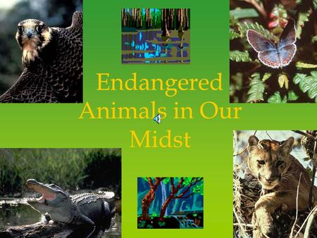 Endangered Animals in Our Midst Definitions Extinct A species of plant or animal that is no longer living. Endangered A species that is in immediate.