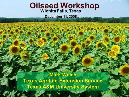 Oilseed Workshop Mark Welch Texas AgriLife Extension Service Texas A&M University System Wichita Falls, Texas December 11, 2008.