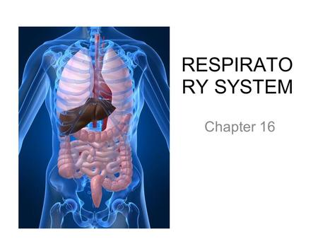 RESPIRATO RY SYSTEM Chapter 16. PRIMARY FUNCTIONS Exchange gases (oxygen and CO2) Produce vocal sounds Sense of smell Regulation of blood PH.