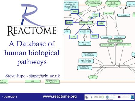 June 2011 1 A Database of human biological pathways Steve Jupe -