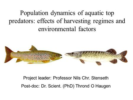 Population dynamics of aquatic top predators: effects of harvesting regimes and environmental factors Project leader: Professor Nils Chr. Stenseth Post-doc: