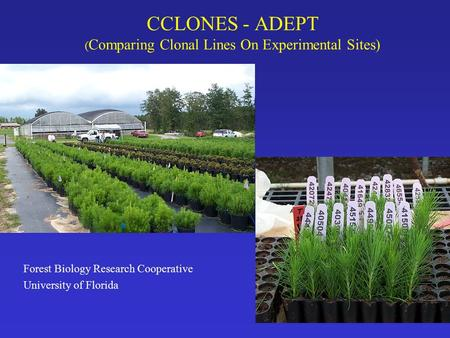 CCLONES - ADEPT ( Comparing Clonal Lines On Experimental Sites) Forest Biology Research Cooperative University of Florida.