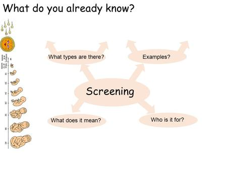 Screening What do you already know? What types are there? What does it mean? Who is it for? Examples?
