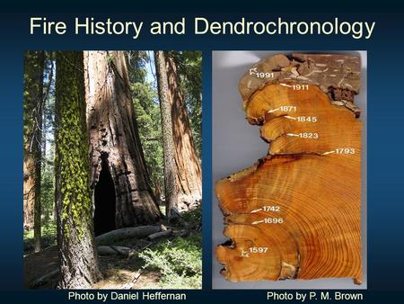 Fire History and Dendrochronology Photo by Daniel HeffernanPhoto by P. M. Brown.