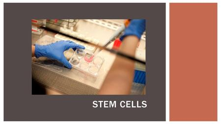 STEM CELLS.  Where do the different cells and tissues in your body come from?  Incredible as it seems, every cell was produced by mitosis from a small.