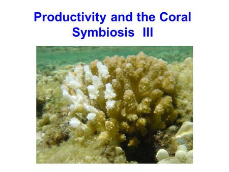 Productivity and the Coral Symbiosis III. Overall productivity of the reef: 4.1 - 14.6 gC/m 2 /d this is organic carbon production must also consider.