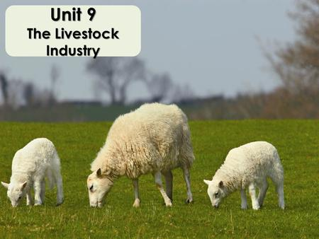 Unit 9 The Livestock Industry. Animal Species Species – most detailed classification Same species? – Can they successfully produce offspring?