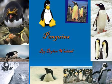 Penguins By Dylan Waddell. Penguins and their habitat.  African penguins live in Africa.  They also live in the South Pole.  Also the North Pole.