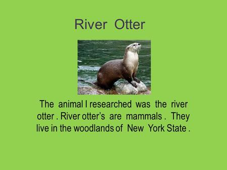 River Otter The animal I researched was the river otter. River otter's are mammals. They live in the woodlands of New York State.