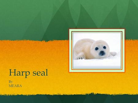 Harp seal ByMEARA Description A harp seal has big eyes and they are white. My animal can live the artic My animal can live the artic.