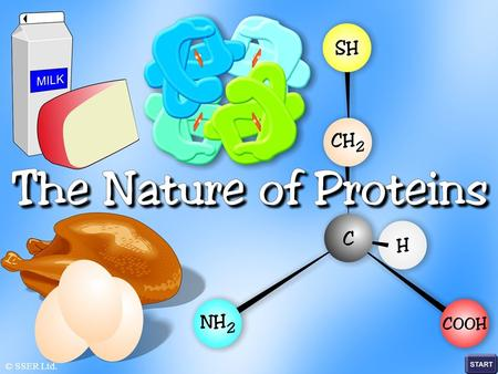 © SSER Ltd.. The significance of proteins cannot be over-emphasised, since they are intimately connected with all phases of the chemical and physical.