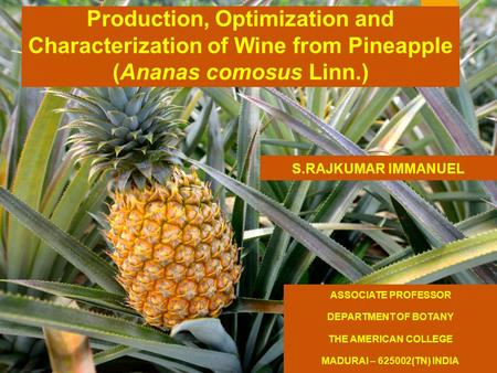 Production, Optimization and Characterization of Wine from Pineapple (Ananas comosus Linn.) ASSOCIATE PROFESSOR DEPARTMENT OF BOTANY THE AMERICAN COLLEGE.